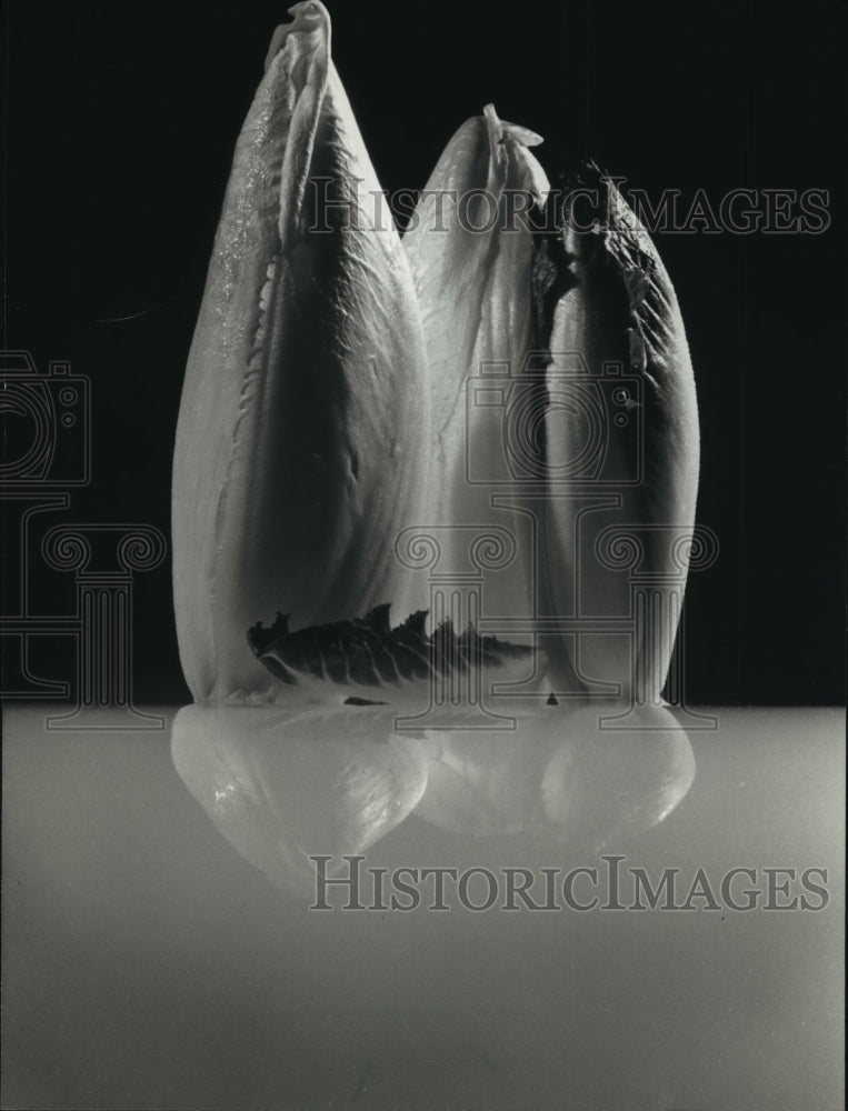 1993 Press Photo Distinctive-shaped Belgian endive is member of chicory family - Historic Images