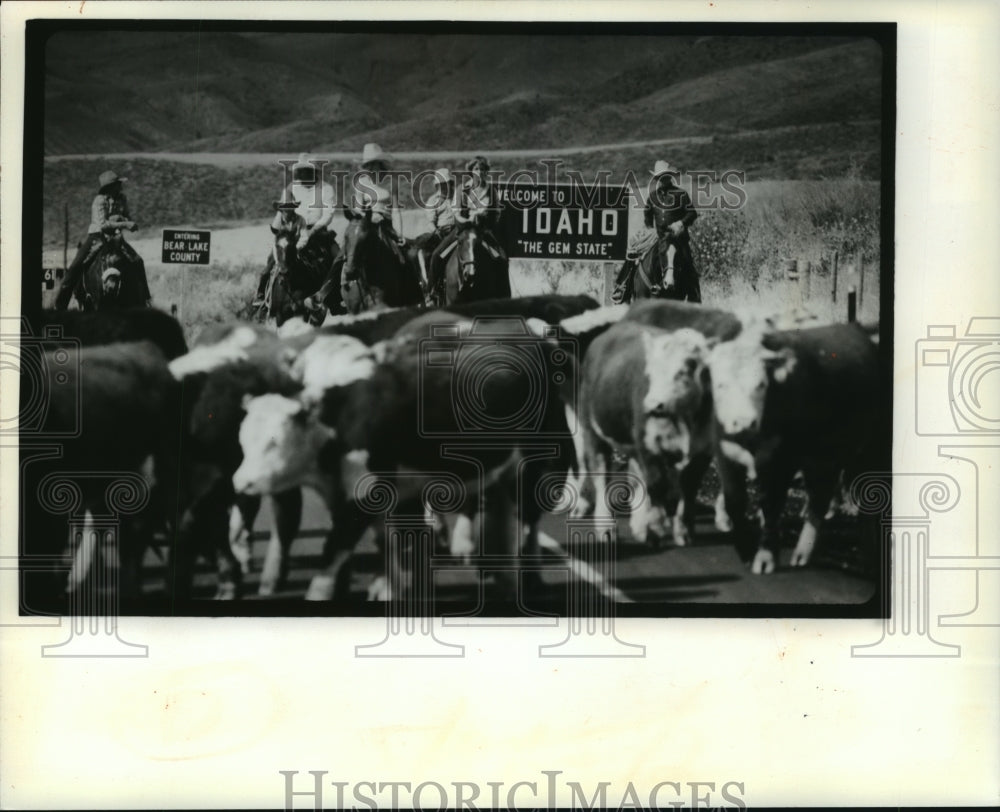 1981 Press Photo Wyoming-Idaho Border Cattle Drive - mjb54917 - Historic Images