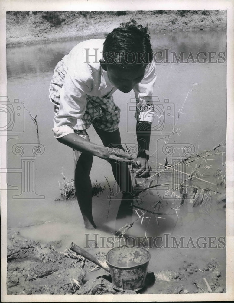 1956 Anti-Malaria Worker Collects Mosquito Larvae From Pon in Burma - Historic Images