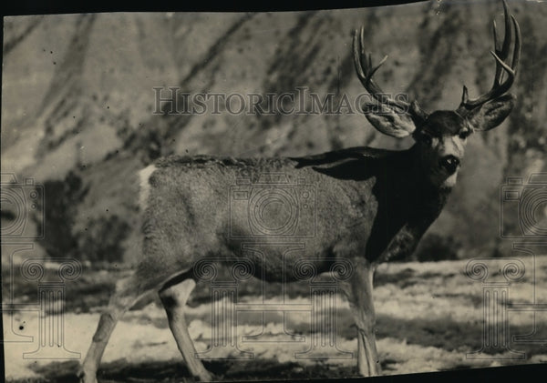 1931 Press Photo Deer in Yellowstone National Park - Historic Images