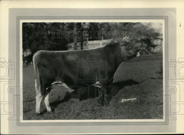 1928 Press Photo Raleighs Dairylike Majesty, Cattle - Historic Images