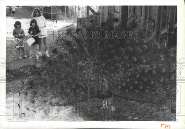 1992 Press Photo Kiley Donohue and others watch peacock at Walk in the Wild Zoo - Historic Images