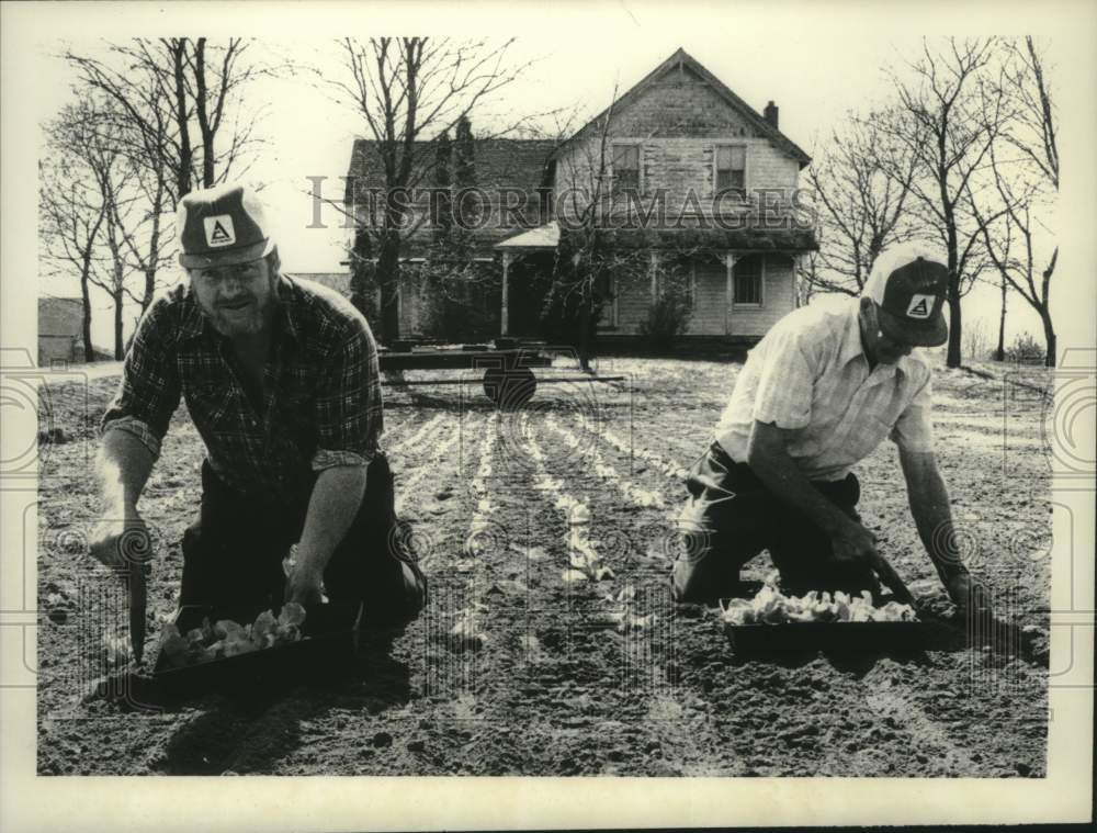 1980 Press Photo Dick and John Wertman plant lettuce on Shaker Rd Albany - Historic Images