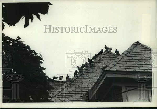 1979 Press Photo Pigeons line the roof of a Scotia, New York building - Historic Images