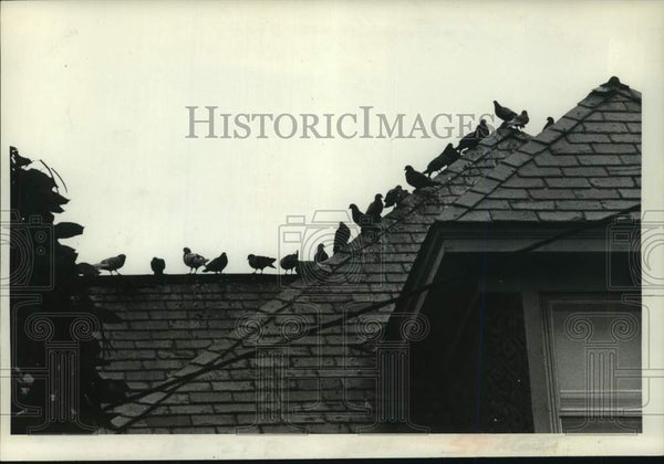 1979 Press Photo Pigeons sit on roof of Scotia, New York building - tua15215 - Historic Images