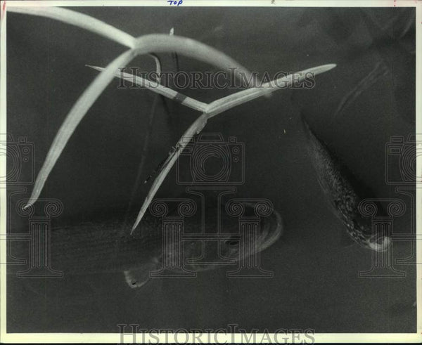 1991 Press Photo Fish swimming in Washington Park Lake, Albany, New York - Historic Images