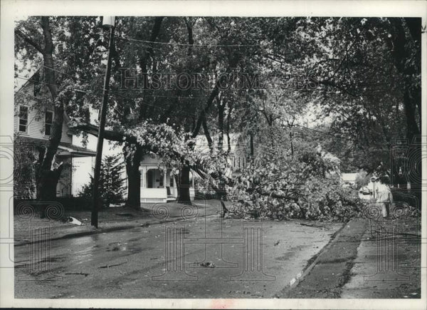 1979 Press Photo Tree downed by Tropical Storm David in Scotia, New York - Historic Images