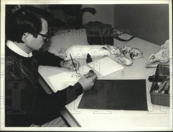 1988 Press Photo Andrew Saunders draws a deer mouse using a specimen as a model - Historic Images