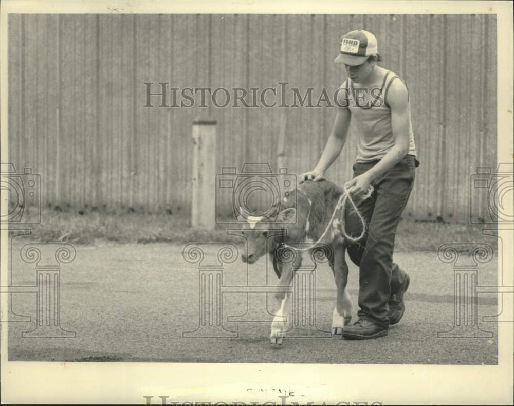 1984 Press Photo Glen Sharp walks calf at Schaghticoke Fair in New York - Historic Images