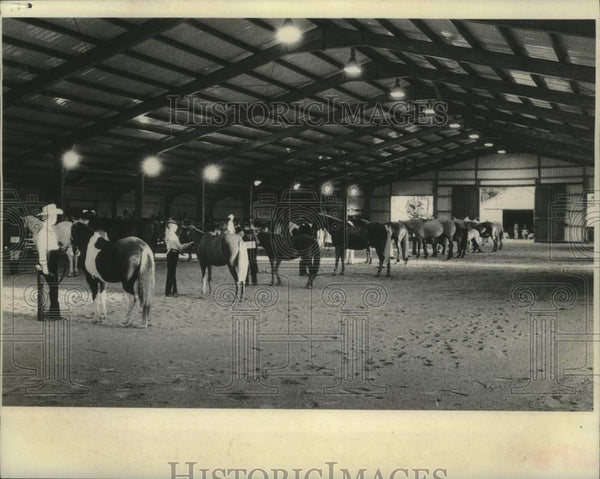 1975 Press Photo Horses lined up for judging at Schaghticoke Fair in New York - Historic Images