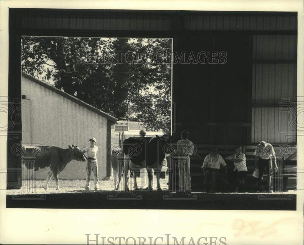 1983 Press Photo Farm kids lead cattle to judging area at Schaghticoke, NY fair - Historic Images