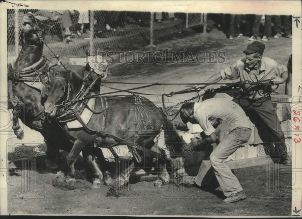 1975 Press Photo Men lead horse team during Schaghticoke, NY fair competition - Historic Images