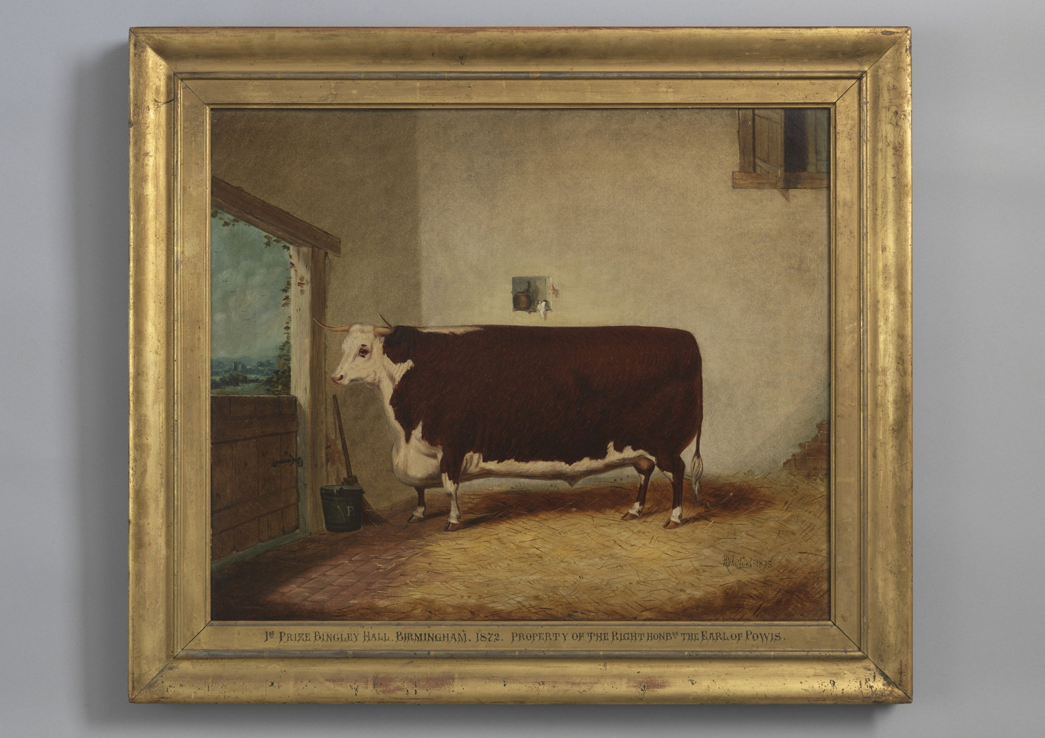A Prize Hereford Bull In A Byre