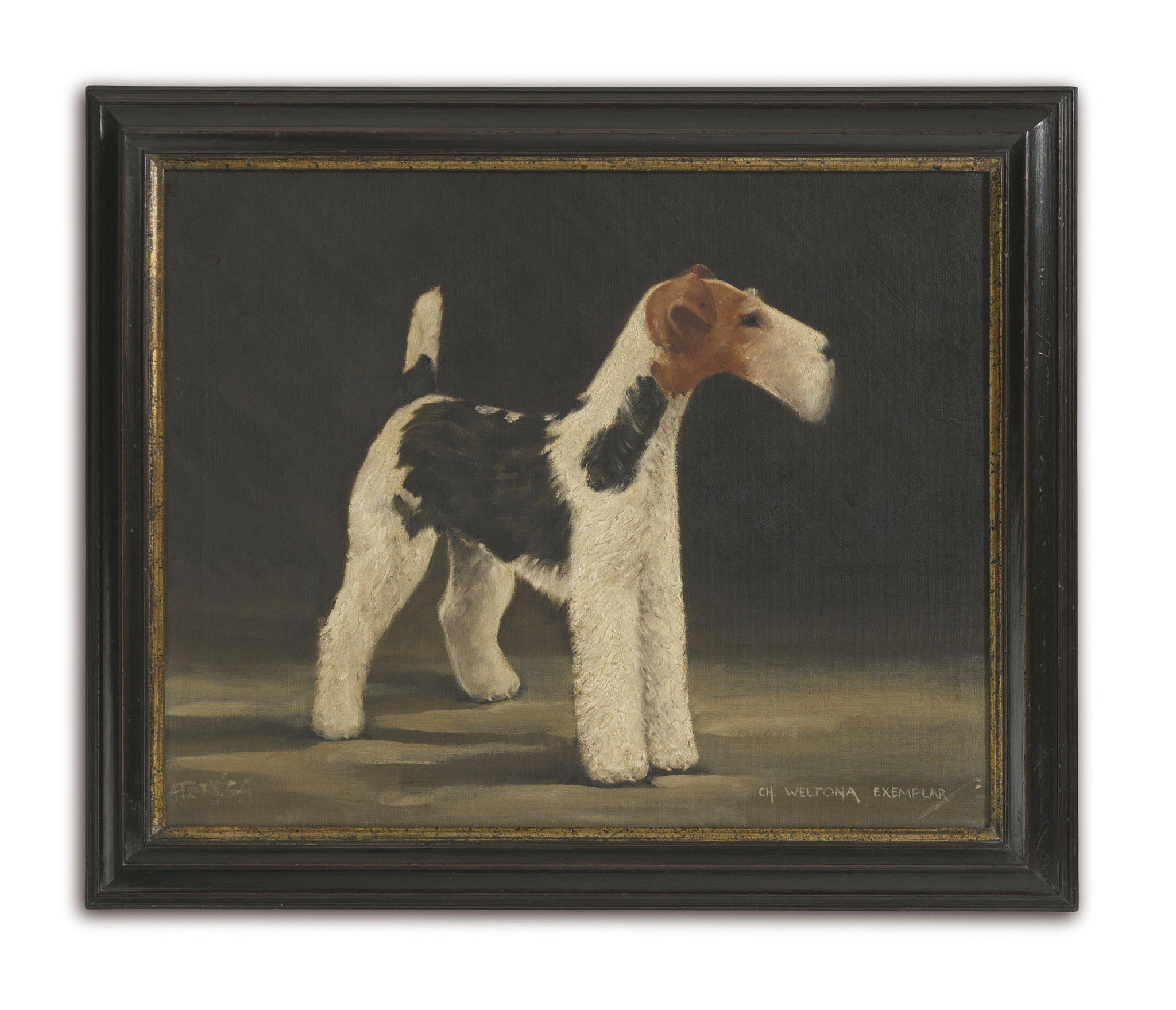 Prize Wire Fox Terrier