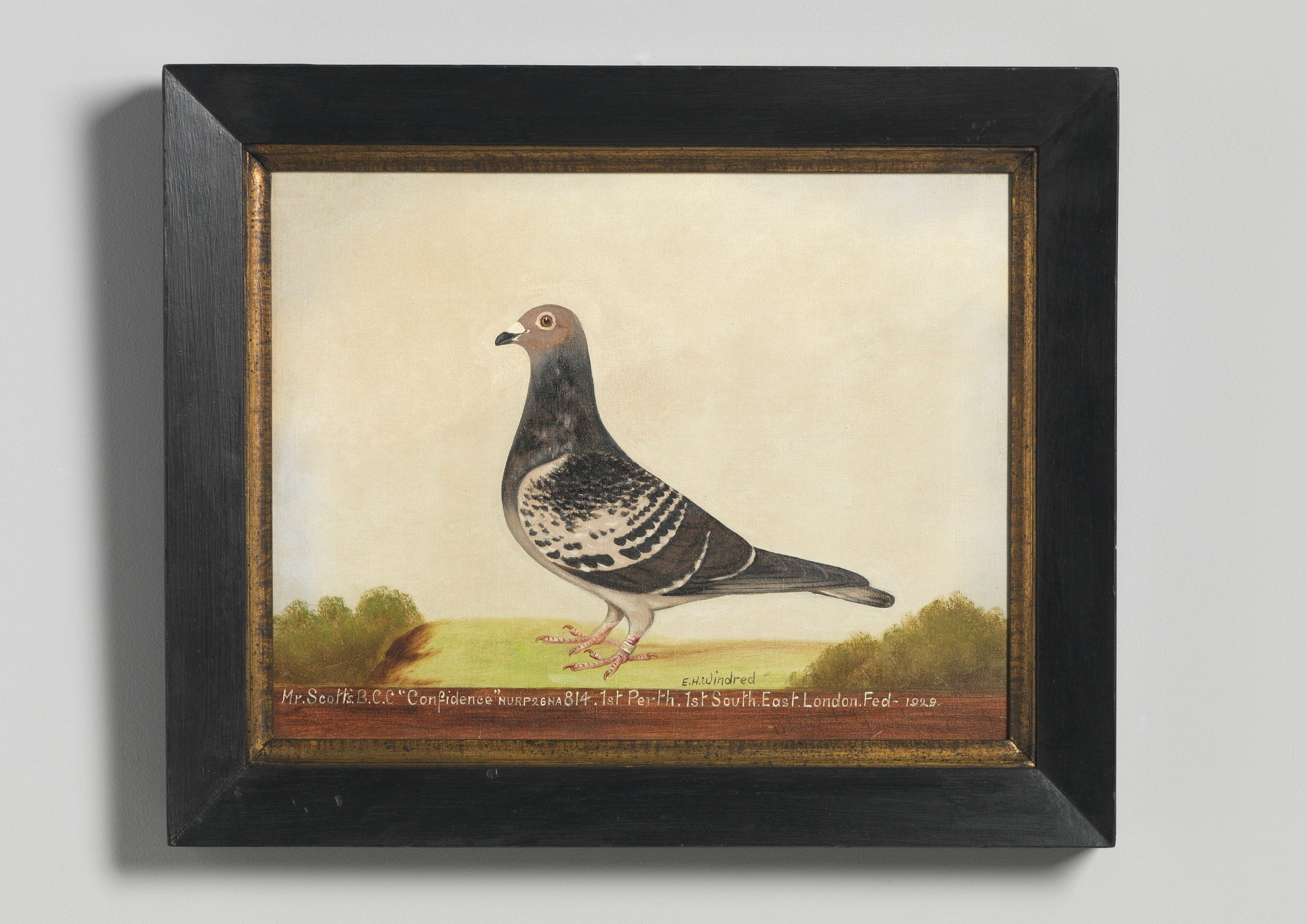 Pair of Racing Pigeon Portraits of 'Confidence'