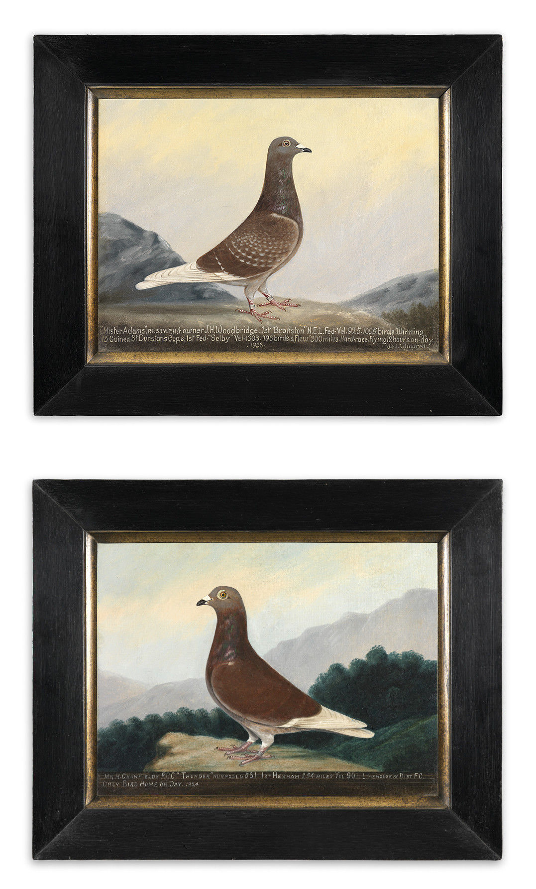"Two Racing Pigeon Portraits ""Mr Adams"" and ""Thunder"""