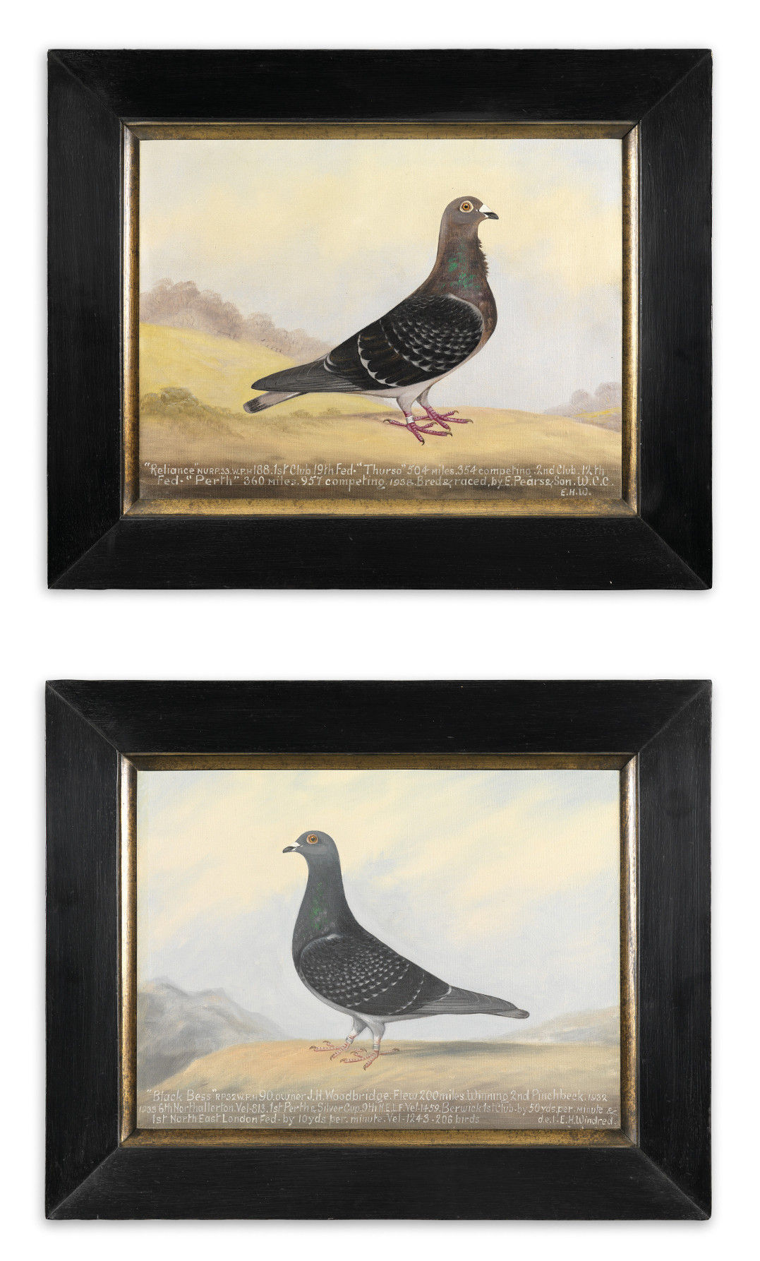 Two Racing Pigeon Portraits 'Reliance' and 'Black Bess'