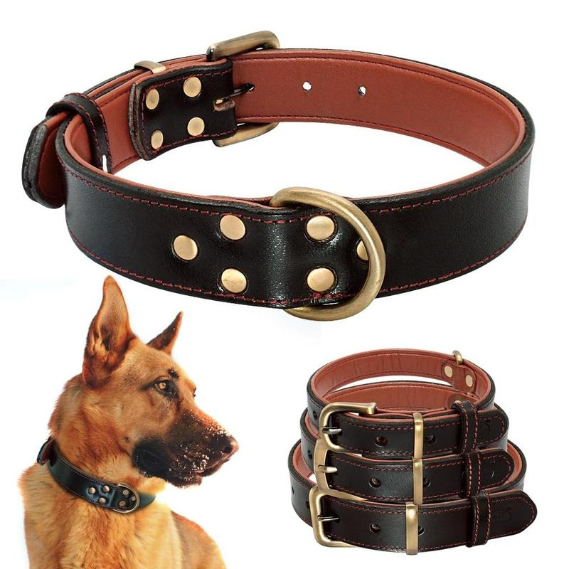 Soft Padded Dog Collar for both Small and Large Dogs-Dog Collars-M-24907589-black-m-Paws and Whiskers