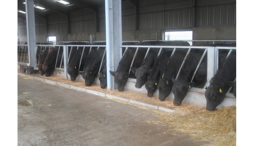 Ritchie Diagonal Feed Barrier