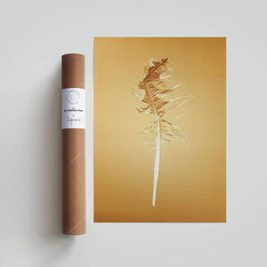 Sybrand Prints Woonaccessoires Nature Trash Feather poster