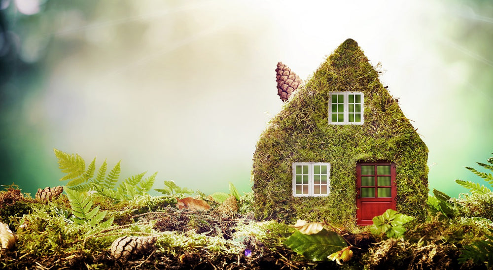 5 Reasons Eco-Friendly Living is Important