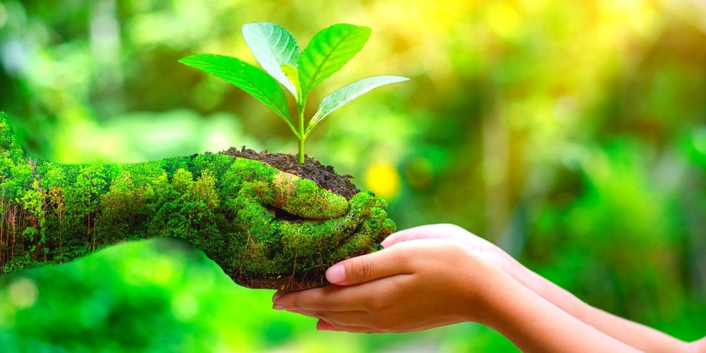 7 Tips To Be More Eco-Friendly in 2020