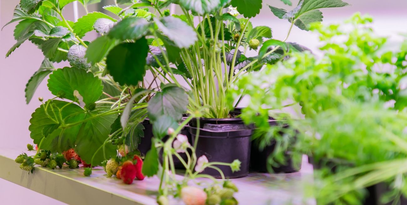 Self Reliant - Grow your own vegetables and fruits at home