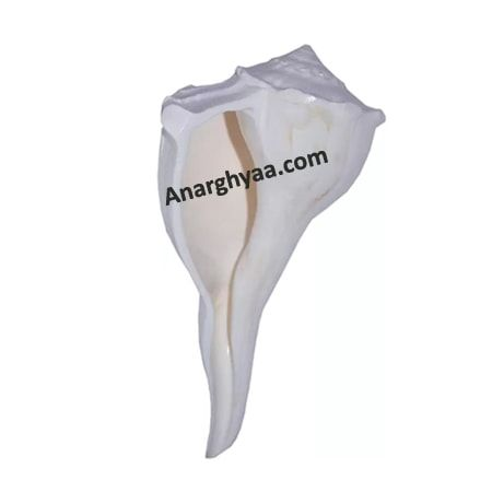 Dakshinavarti Shankh Conch, Anarghyaa.com, Puja accessories, puja items online