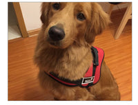 Dog Name No Pull Harness Costumized
