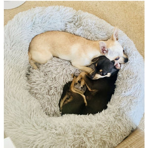 All about Best Pet Beds
