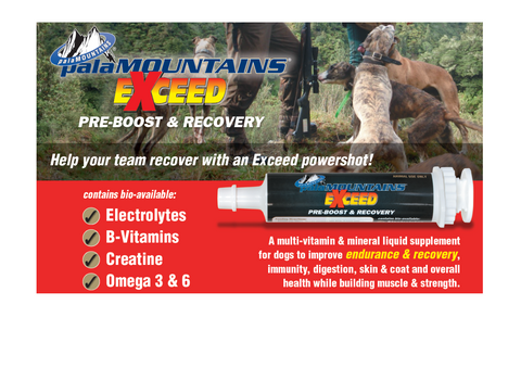 PreBoost and Recovery multivitamin and mineral supplement for working and hunting dogs. 80mls