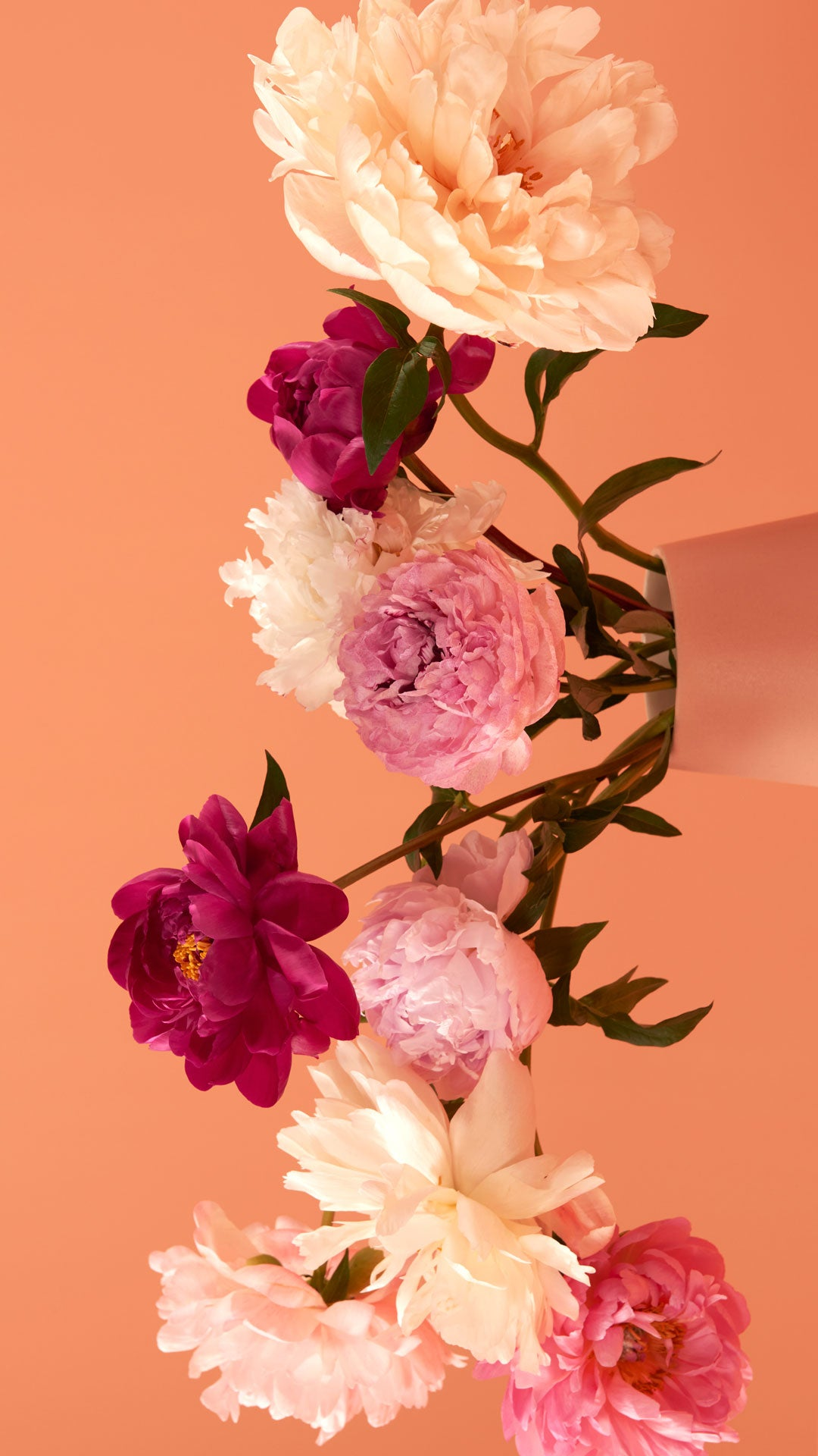 Wallpaper with peonies