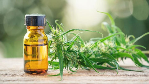 Is CBD Oil Legal in the UK