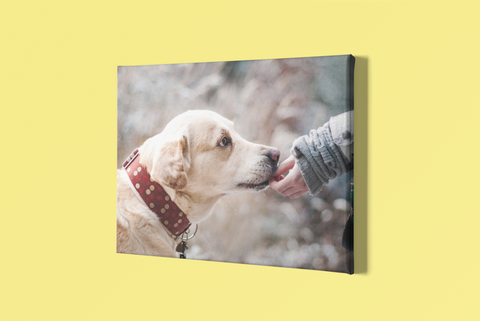 Print Your Pet Photo on Canvas