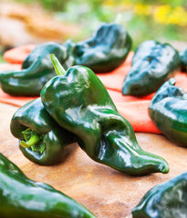 Poblano (Ancho) Pepper (2-Pack)