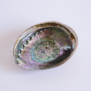 Lucin Abalone Smudge Shell