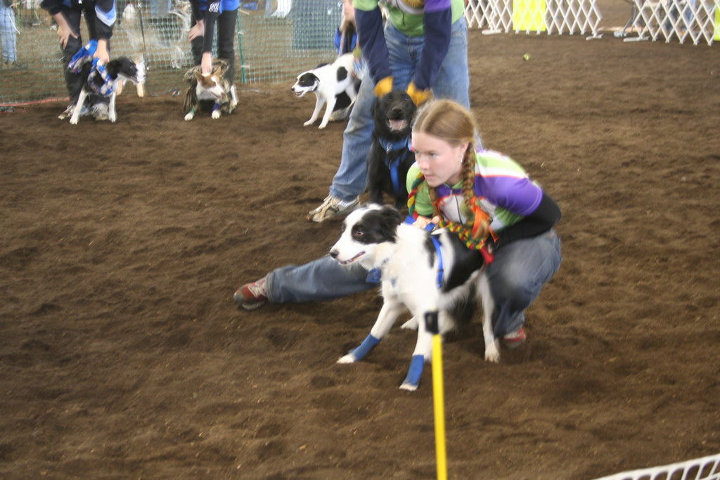 How to Prepare for Your First Flyball Tournament
