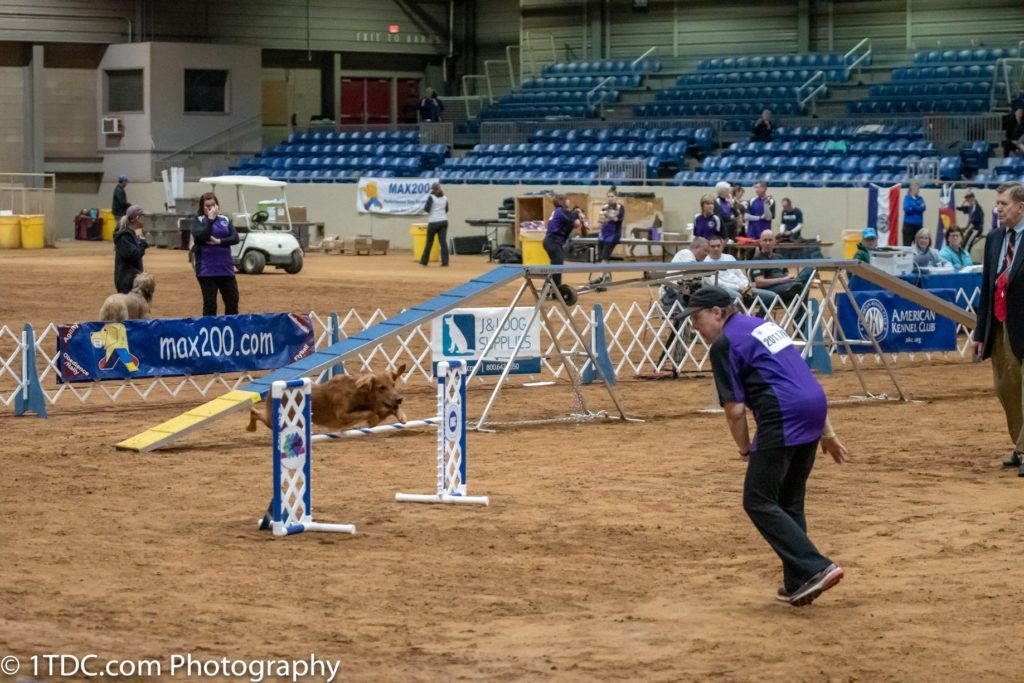 Miracle Recovery: Rev's Journey to the 2019 AKC National Agility Championship Finals