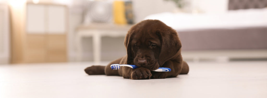 National Pet Dental Health Month: Why Good Oral Health Is Important