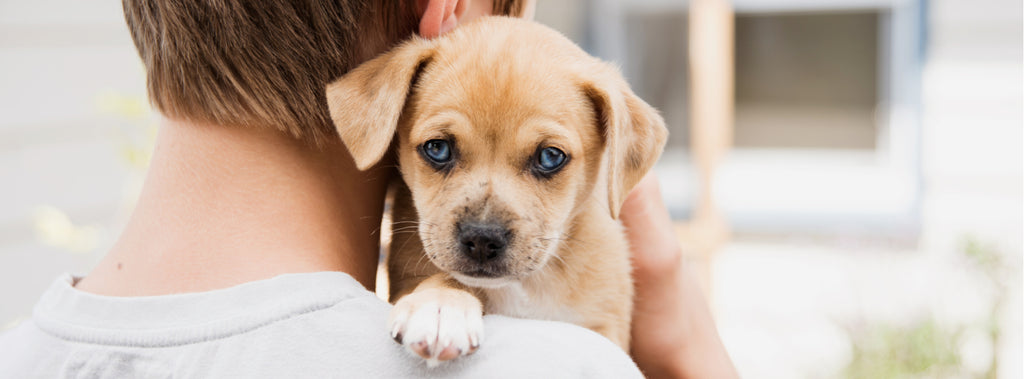 Steps to Take When Choosing and Caring for a New Pet