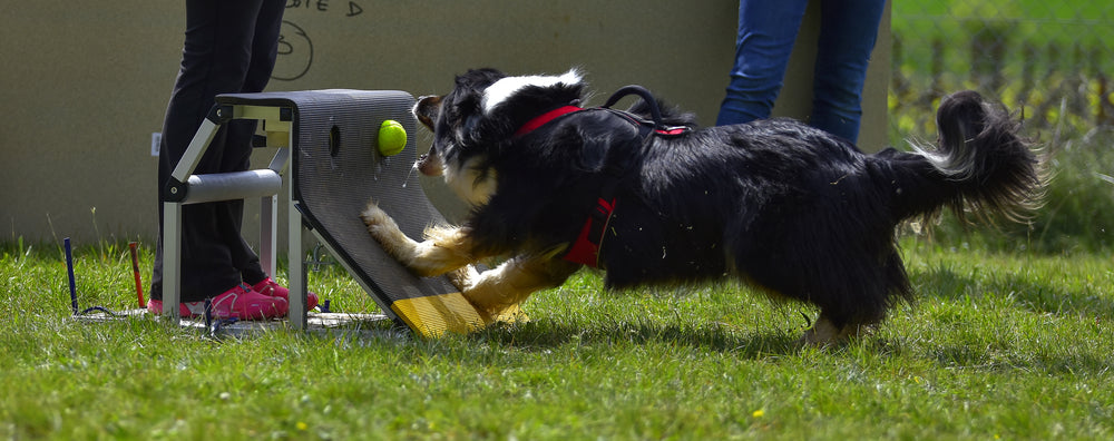 Top 5 Tips for Keeping Your Sport Dogs Healthy So They Can Compete Longer