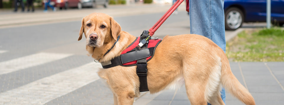 Service Animals and Emotional Support Animals: Registering, Traveling, and More