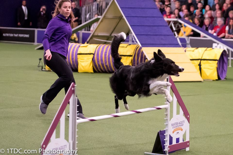 Interview with Westminster Masters Agility Champion Perry DeWitt
