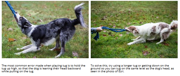 Playing Tug Safely with Your Dog