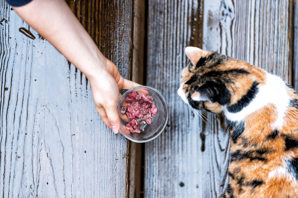 The role diet plays in feline oral and dental health