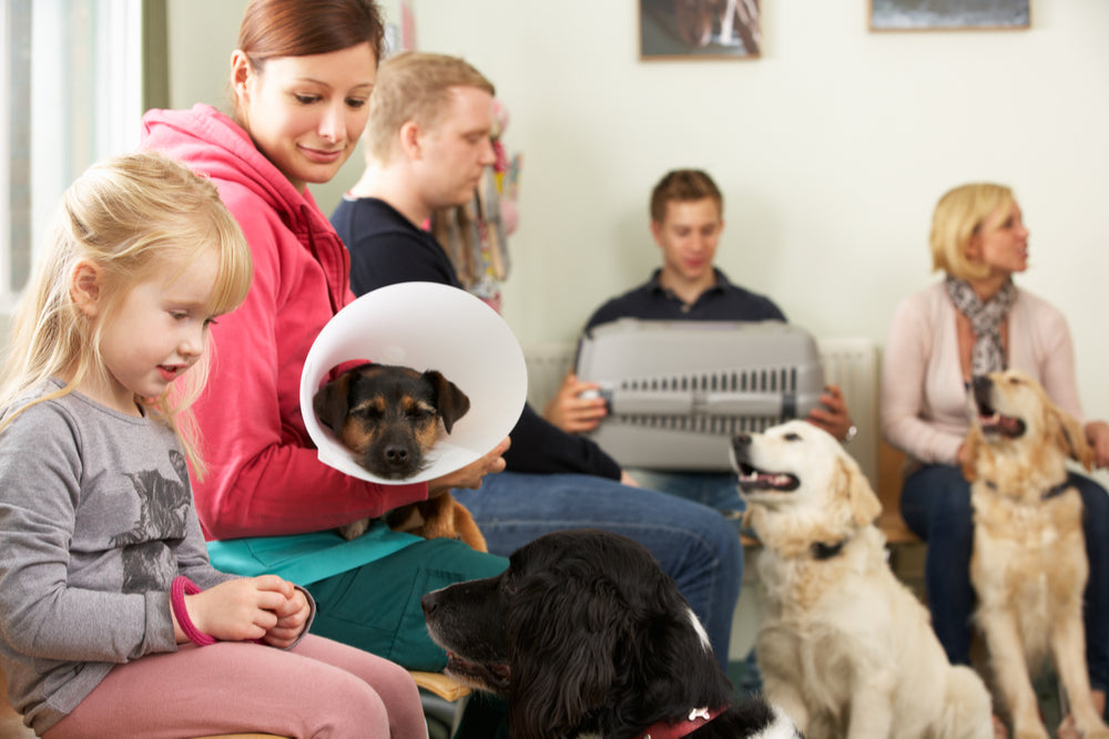 How to Choose a Veterinarian for Your New Pet
