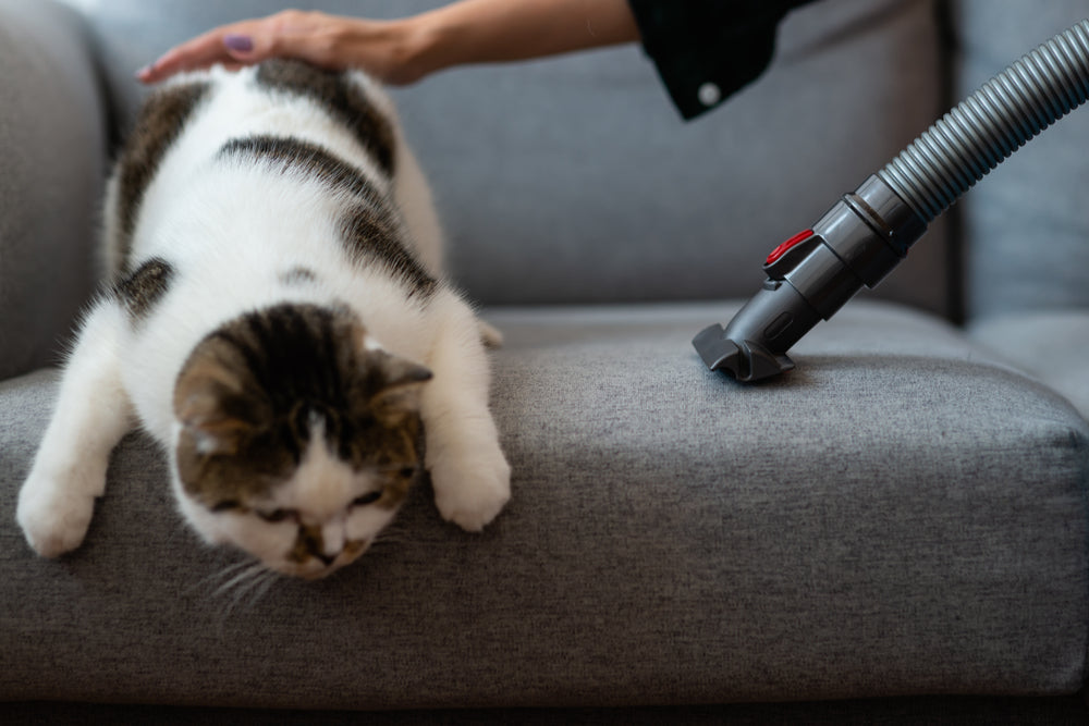 What Is Pet Dander and How Can I Get Rid of It?