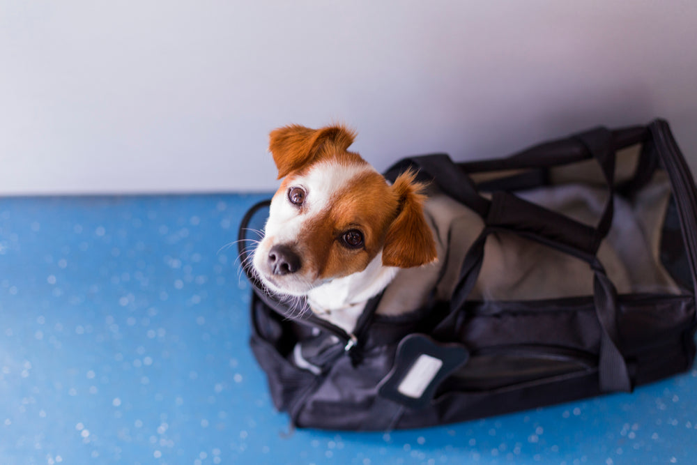 Service Animals and Emotional Support Animals Registering Traveling and More