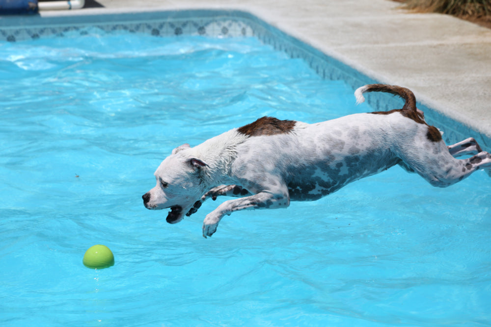 How to Pick the Best Dog Toy for Dock Diving