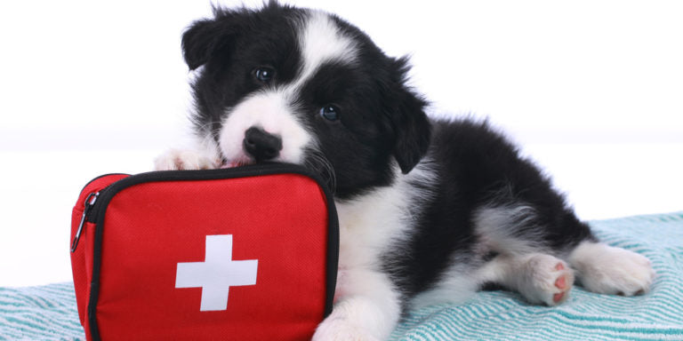 A Look at Pet First Aid and CPR: Steve Ross on Responding to Your Pet in a Crisis